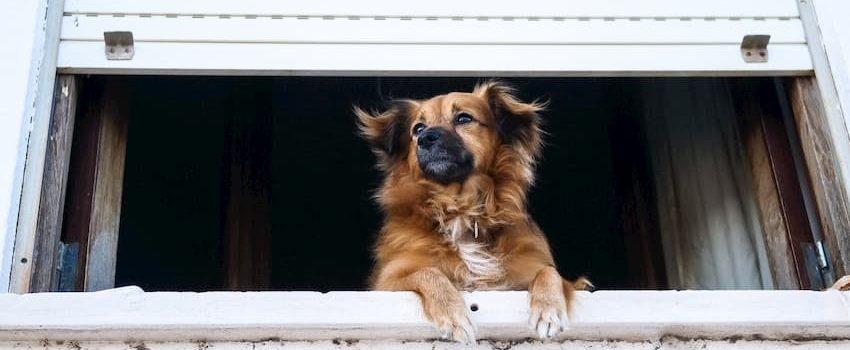 kutya karanténban