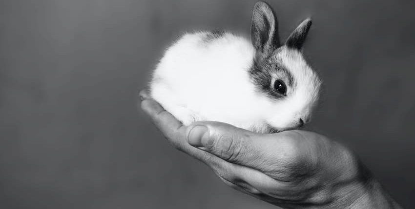 Mit jelent a cruelty-free